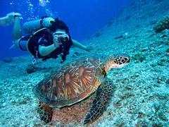 Aquatic animal coral diver - Credit to https://homegets.com/