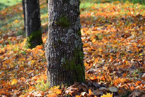 La saison des feuilles mortes
