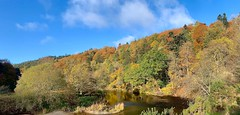 Autumn by the River Tweed