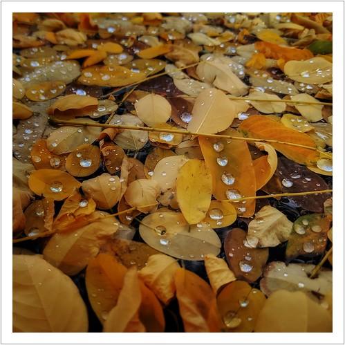Herbstzeit ist Wassertropfenzeit...