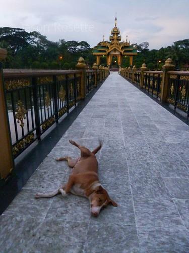 Happy Dog on Walkway at Temple in Rangoon (Dusk)