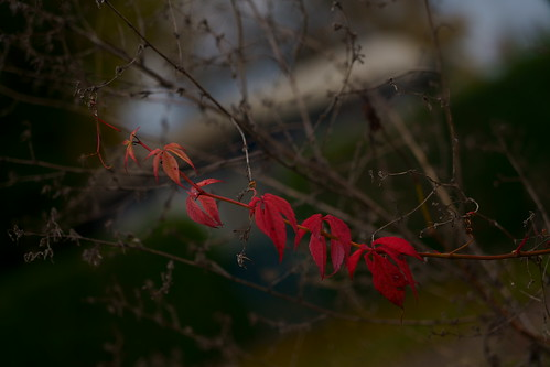 Herbstmotive