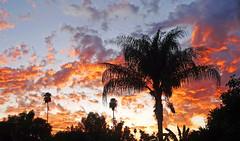 California Sunset 10-19
