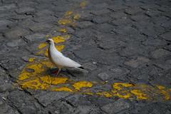Birds in the street