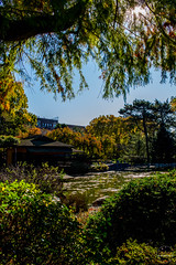 2019-11-02 Fall Visit to Brooklyn Botanical Gardens (Touch Edits) - 057