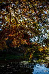 2019-11-02 Fall Visit to Brooklyn Botanical Gardens (Touch Edits) - 050