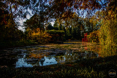 2019-11-02 Fall Visit to Brooklyn Botanical Gardens (Touch Edits) - 048