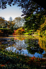 2019-11-02 Fall Visit to Brooklyn Botanical Gardens (Touch Edits) - 046