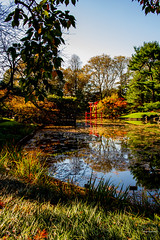2019-11-02 Fall Visit to Brooklyn Botanical Gardens (Touch Edits) - 043