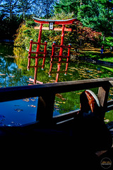 2019-11-02 Fall Visit to Brooklyn Botanical Gardens (Touch Edits) - 025