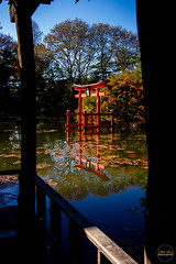 2019-11-02 Fall Visit to Brooklyn Botanical Gardens (Touch Edits) - 022