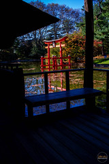 2019-11-02 Fall Visit to Brooklyn Botanical Gardens (Touch Edits) - 021