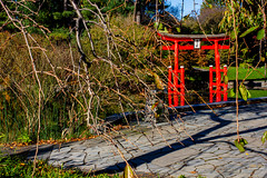 2019-11-02 Fall Visit to Brooklyn Botanical Gardens (Touch Edits) - 005