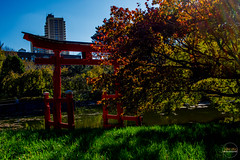 2019-11-02 Fall Visit to Brooklyn Botanical Gardens (Touch Edits) - 059