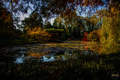 2019-11-02 Fall Visit to Brooklyn Botanical Gardens (Touch Edits) - 049