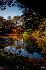 2019-11-02 Fall Visit to Brooklyn Botanical Gardens (Touch Edits) - 047