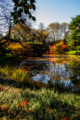 2019-11-02 Fall Visit to Brooklyn Botanical Gardens (Touch Edits) - 045