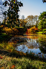 2019-11-02 Fall Visit to Brooklyn Botanical Gardens (Touch Edits) - 044