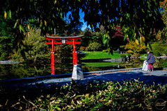 2019-11-02 Fall Visit to Brooklyn Botanical Gardens (Touch Edits) - 038