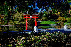 2019-11-02 Fall Visit to Brooklyn Botanical Gardens (Touch Edits) - 037
