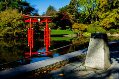2019-11-02 Fall Visit to Brooklyn Botanical Gardens (Touch Edits) - 033