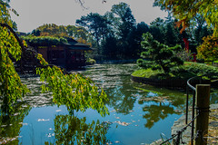 2019-11-02 Fall Visit to Brooklyn Botanical Gardens (Touch Edits) - 054