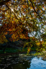2019-11-02 Fall Visit to Brooklyn Botanical Gardens (Touch Edits) - 051