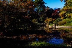 2019-11-02 Fall Visit to Brooklyn Botanical Gardens (Touch Edits) - 042