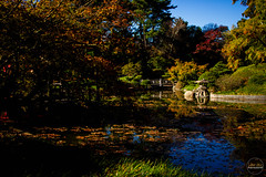 2019-11-02 Fall Visit to Brooklyn Botanical Gardens (Touch Edits) - 039