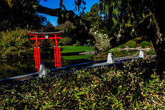 2019-11-02 Fall Visit to Brooklyn Botanical Gardens (Touch Edits) - 035
