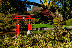 2019-11-02 Fall Visit to Brooklyn Botanical Gardens (Touch Edits) - 007