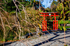 2019-11-02 Fall Visit to Brooklyn Botanical Gardens (Touch Edits) - 006