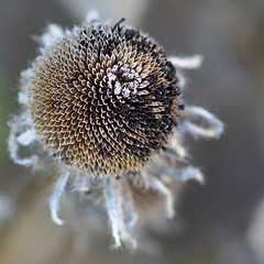 Seedpod Macro