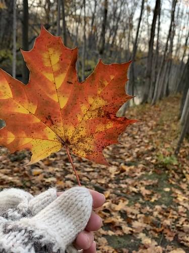 Fall. 🍁