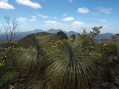 Blackboys & Views - Mt Trio, Stirling Ranges, Western Australia