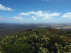 Sue In A Sea Of Wildflowers - Mt Trio, Stirling Ranges, Western Australia
