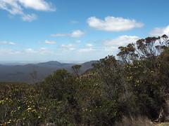 Wildflowers & Views - Mt Trio, Stirling Ranges, Western Australia