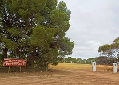 Petersville on Yorke Peninsula inland from Ardrossan. The football oval is growing a good crop of wheat this year.