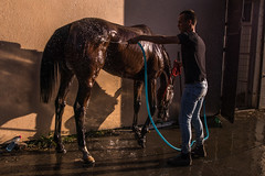 Man bathing a tired racing horse