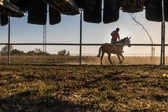 Vitez zagreva svog konja pre takmicenja