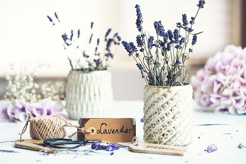 Lavender brings us grace, good luck and a peace of mind!