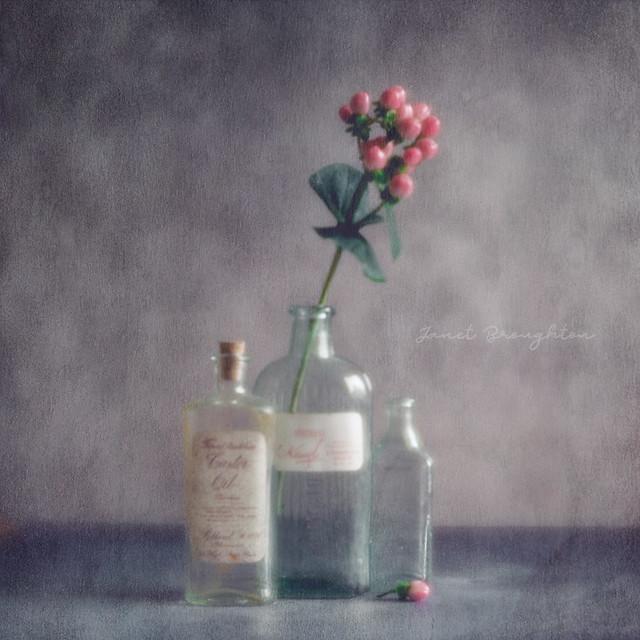 Bottles + Berries