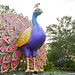 Giant peacock