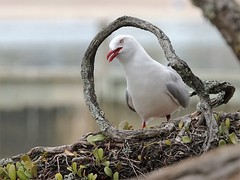Seagulls, Oyster catchers etc