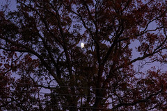 November Moon Over Falls Church