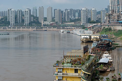 31505-Chongqing