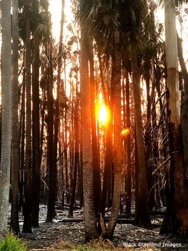Sun Setting through the Fire Scene at John Wright House, South Street, Tuncurry, Mid North Coast, NSW, 26th October 2019