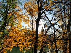 Herbst am Donaukanal