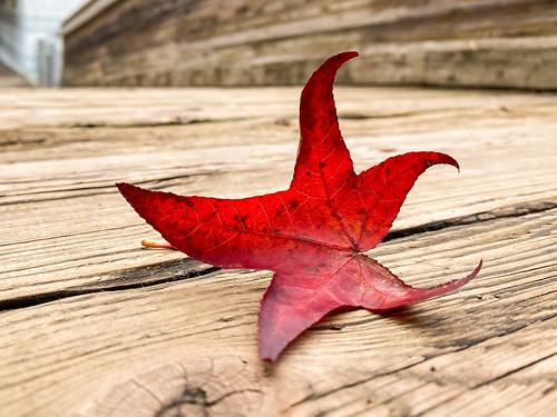 Red leaf on a little wooden bridge
