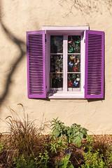 Purple blinds